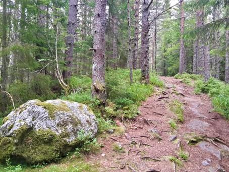 En liten skogstur