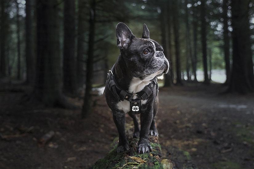 french-bulldog-6038122_1920 mock up.jpg