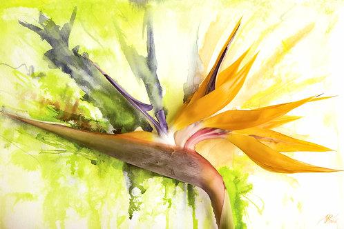 Watercolor Paradise