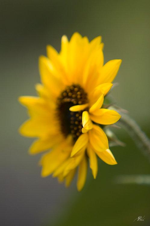 Yellow Flair