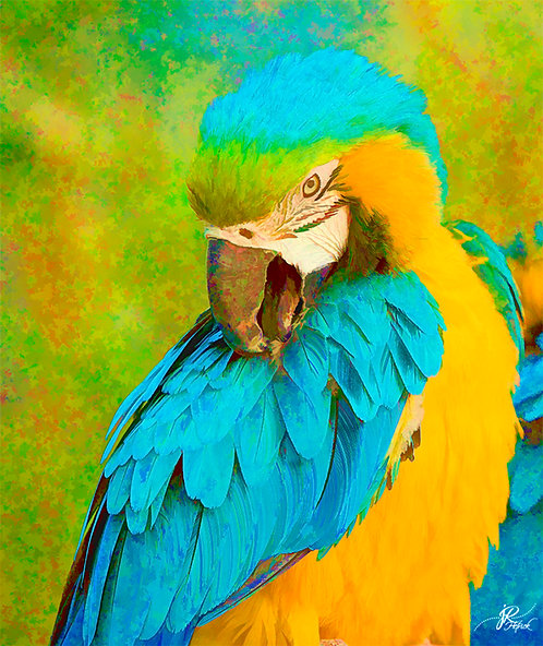 Painterly Parrot