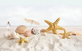 Starfish Wallpapers 05.jpg