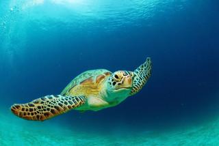 Les tortues de la Floride