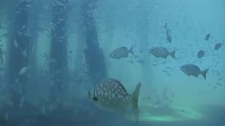 Caméras LIVE sous marine - Pier plage Deerfeld Beach