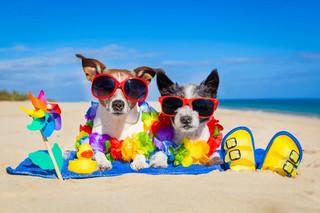 Une section au nord de la plage de Deerfield Beach accepte les chiens.