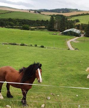 Pony-Land-1a.jpg