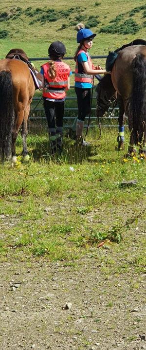 Horse-Gate-1a.jpg
