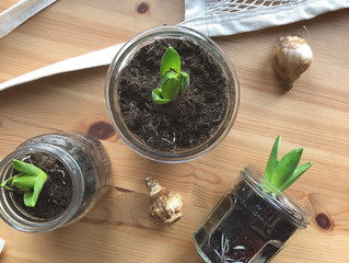 Bringing Spring Inside:  A lovely DIY for dark winter days.
