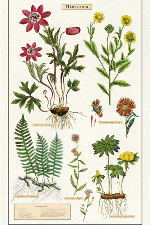 Cavallini Tea Towel in Herbarium Design