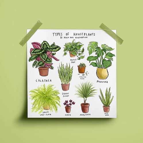 Types of Houseplants Print
