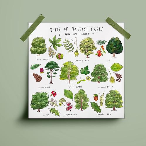 Types of British Trees Print