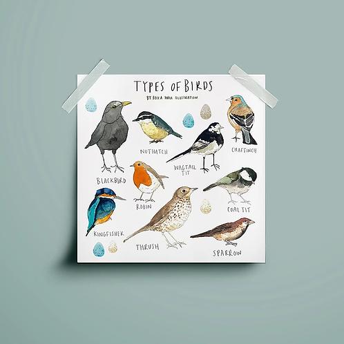 Types of Birds Print