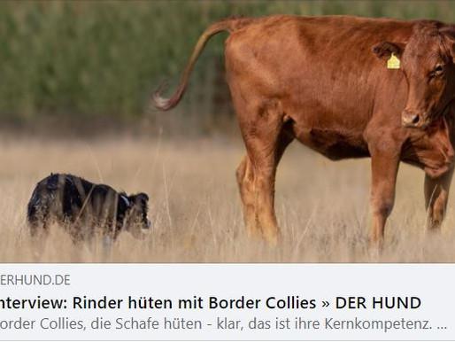 """Interview von """"DER HUND"""""""
