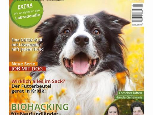 Artikel in der Hundewelt