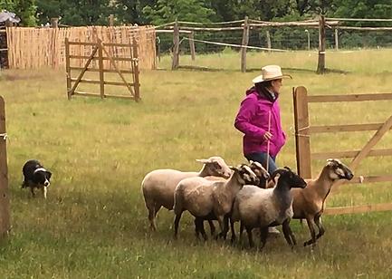 Melanie Georg mit ihrer Boder Collie Hündin Peach arbeiten Schafe