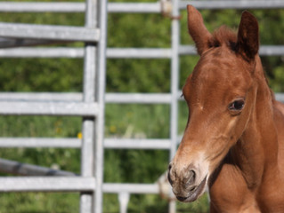 New pics of the youngest foal out of Hickorys Dual Violet x Rainboon Man