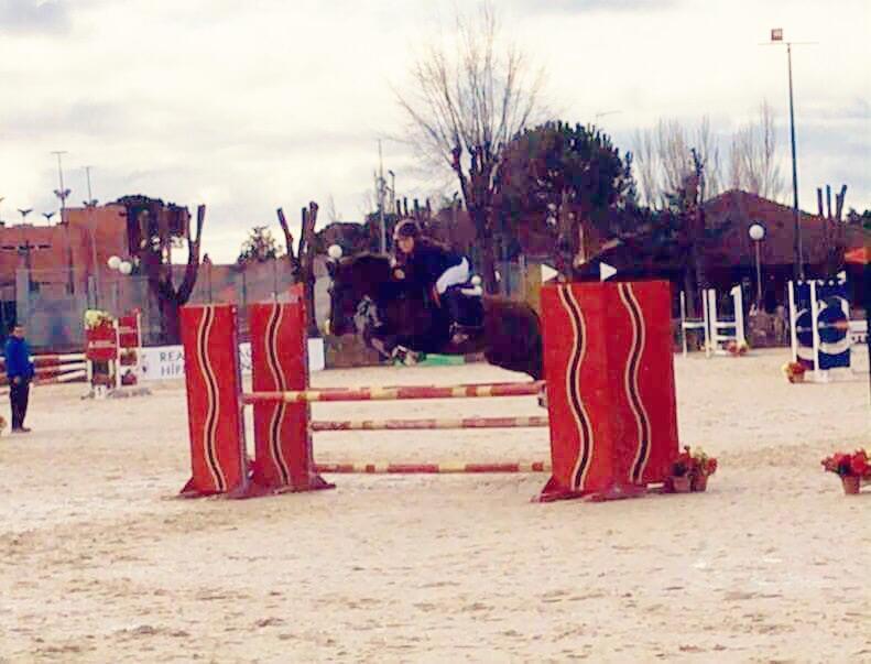 Zarina poni D en venta