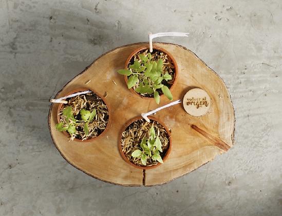 Huerta de mesa - 3 plántulas