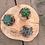 Thumbnail: Suculenta de mesa x 3