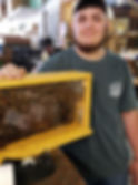 Bee Picture 1.JPG