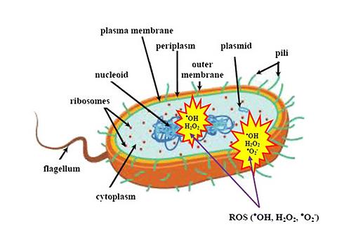 Microbs.png