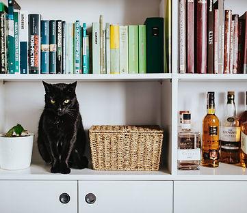 kaboompics_Black cat by a wicker basket