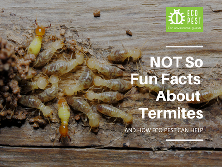 NOT So Fun Facts About Termites