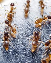 Eco Pest General Pest Control