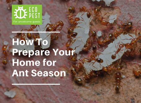 How To Prepare Your Home for Ant Season