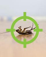 Eco Pest Green Control