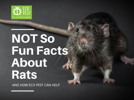 NOT So Fun Facts About Rats
