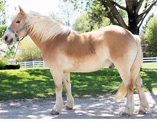 Garth Horse