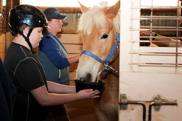 TEC rider feeding horse