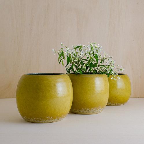Žluté nádoby na květináče