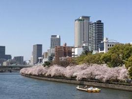 大川から見る桜の景色