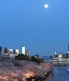 大川から見る桜の夜の風景
