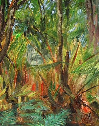 Ohi`a and Hapu`u forest, Volcano, Hawaii Island