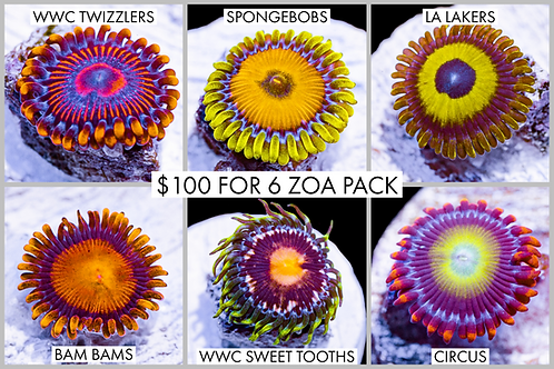 Amazing Hardy Zoanthid Pack #1