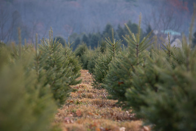15406_AGRI_TreesForTroops_DE_018.JPG.jpg