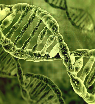 what is cell free nucleic acid