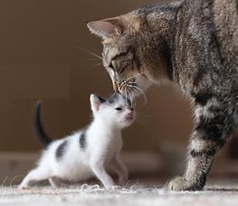 cat & mama.png