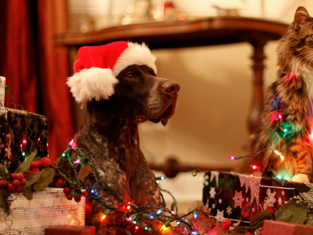 Pets and the Holidays - A Cautionary Tale