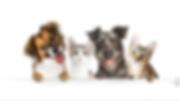 animal banner.PNG
