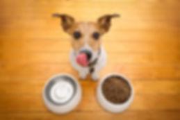 dog eating2.jpg