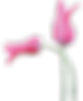 Shannon Moroney tulip logo