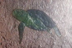 Stamped Concrete Turtle
