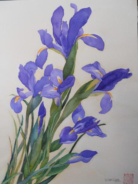 Iris 16X12