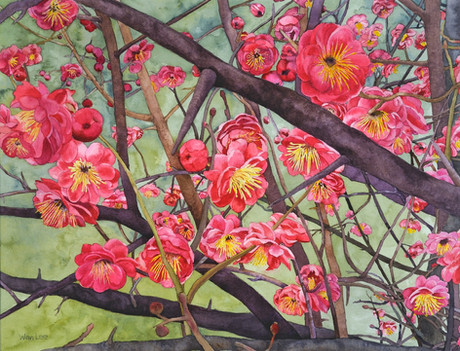 Plum Blossom 17.5 X 22.jpg