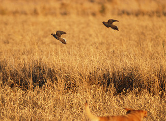 Is Imperial County on the verge of asking state to close dove opener?