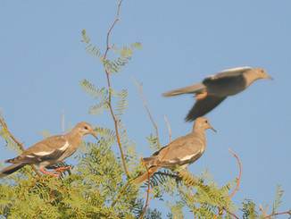Doves or Dinosaurs?